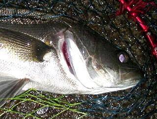 namihaya2009-6.jpg